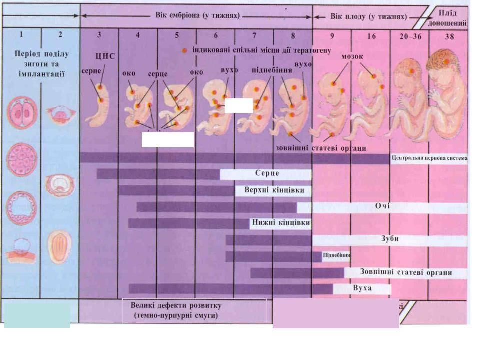 На какой день имплантация эмбриона после овуляции: когда происходит имплантация, как долго длится, поздняя и ранняя имплантация после криопереноса при эко