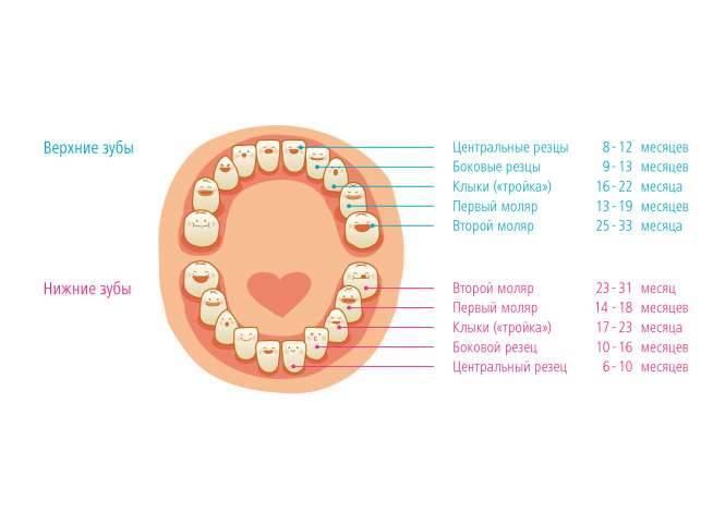 Сколько держится температура при прорезывании зубов? какая температура при прорезывании зубов допустима?