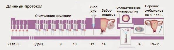 Стадии развития эмбриона в эко до переноса по дням