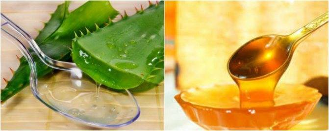 Сок алоэ: от насморка для детей и взрослых, как приготовить капли в нос, рецепты, как капать в домашних условиях
