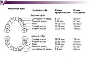 Когда меняются молочные зубы на постоянные — наглядная схема