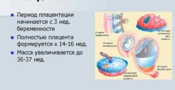 Зрелость плаценты по неделям: степени и нормы