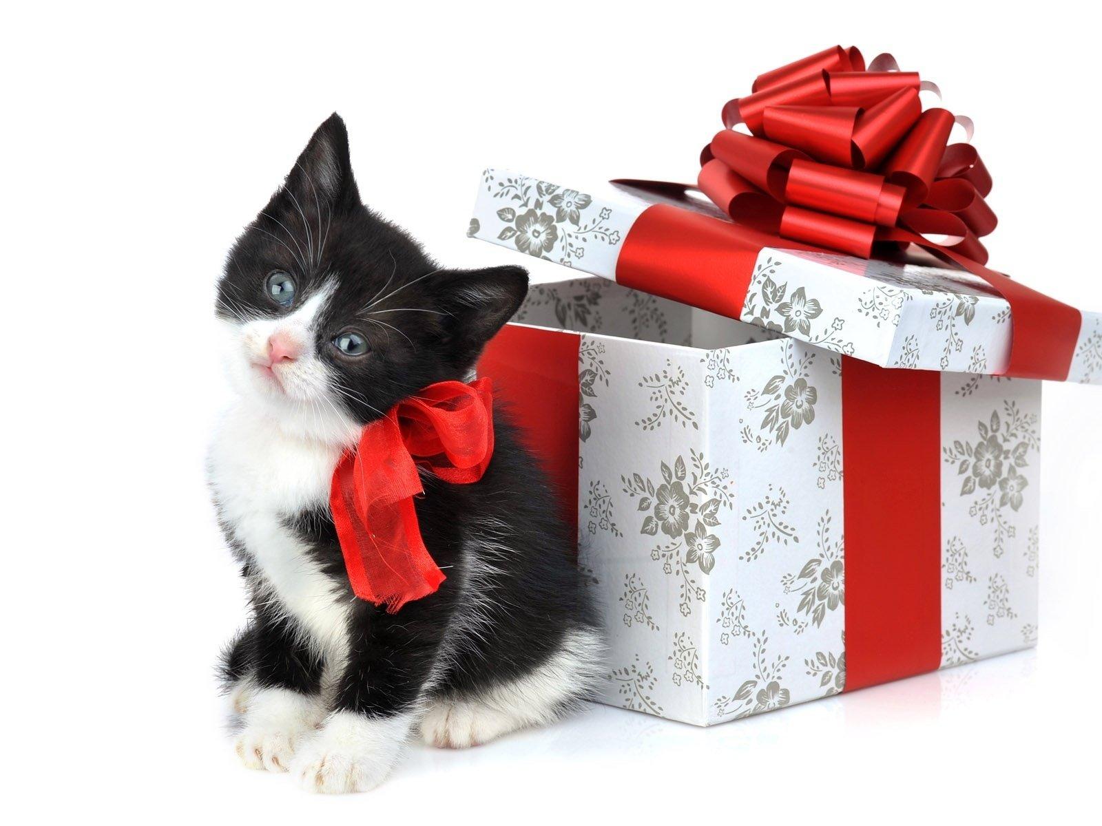 Помощь при выборе котёнка