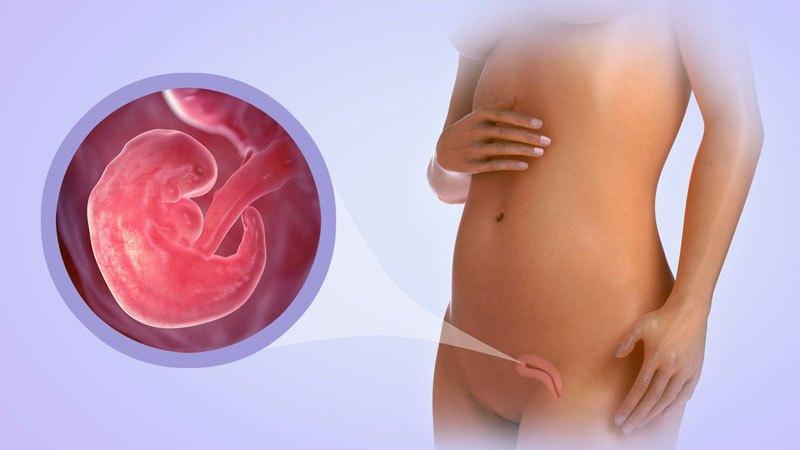 6 неделя беременности (46 фото): что происходит с малышом и мамой на 6 акушерской неделе или 4 от зачатия, симптомы, развитие и ощущения, простуда
