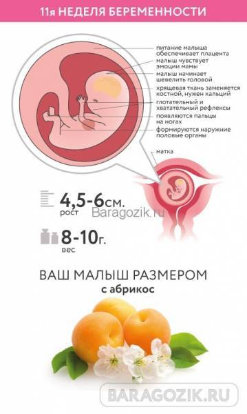 Что происходит с мамой и ребенком на 5 неделе беременности?