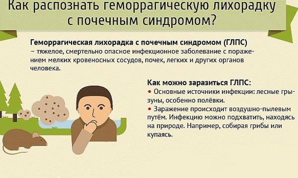 Мышиная лихорадка - симптомы и лечение, как можно заразиться