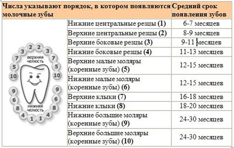Нормы прорезывания зубов у детей до года и старше: порядок появления первых зубов у младенцев со схемами и сроки прорезывания молочных и постоянных зубов по комаровскому   qulady