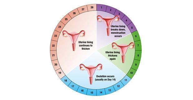 Нет месячных 2 месяца, но не беременна: в чем причины отсутствия менструации, что делать при длительной задержке