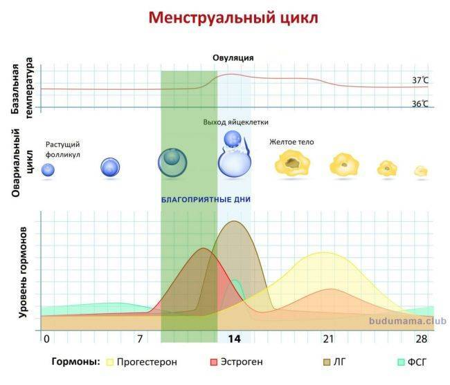 ❣️ рассчитать овуляцию онлайн - календарь овуляции, таблицы, графики зачатия    эко-блог