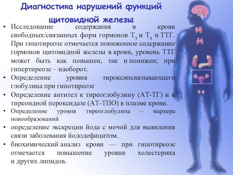 Гормон пролактин - влияния, функции, выработка и отклонение