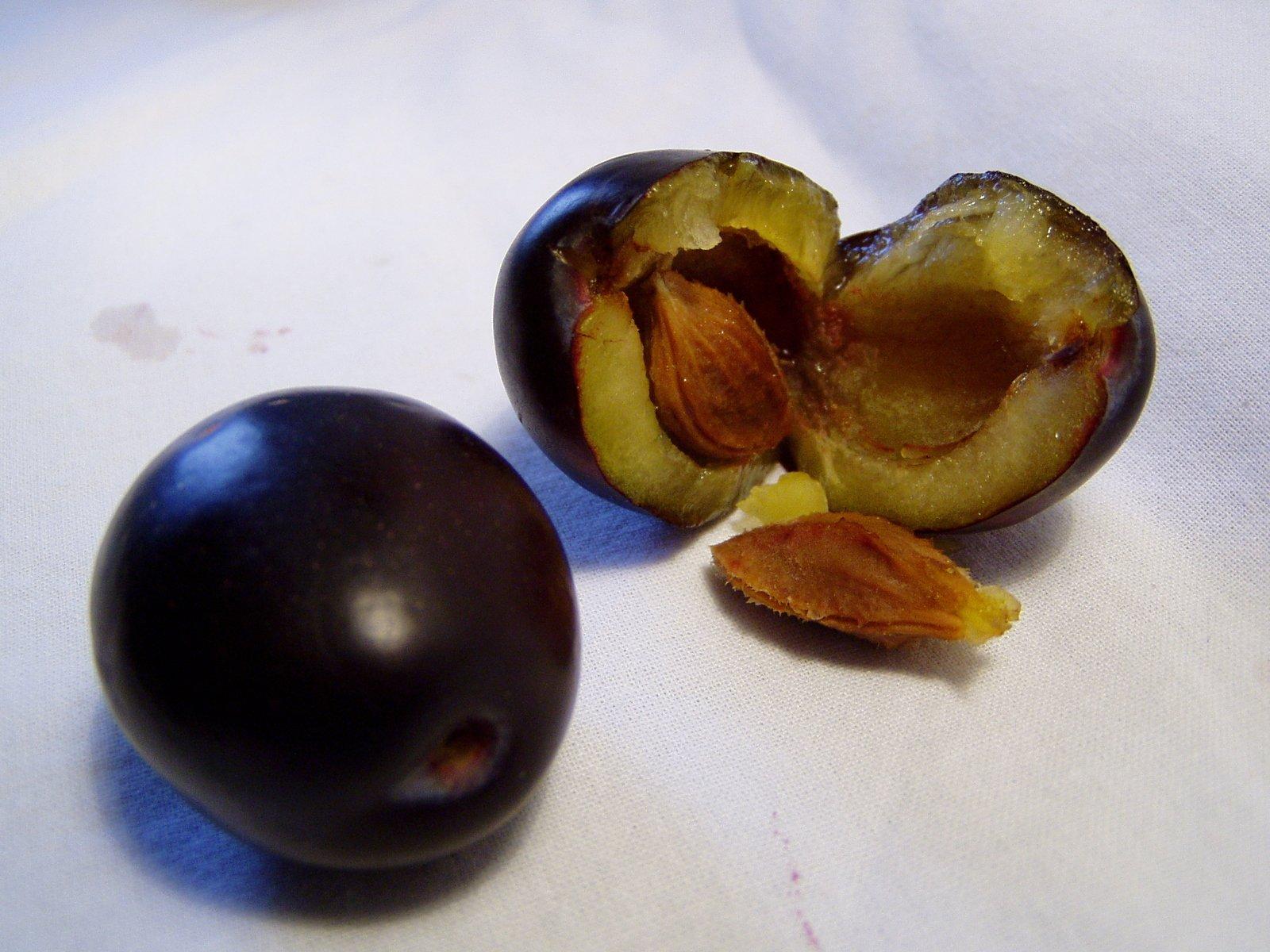 Ребенок проглотил косточку абрикоса или вишни-что делать? — teletype