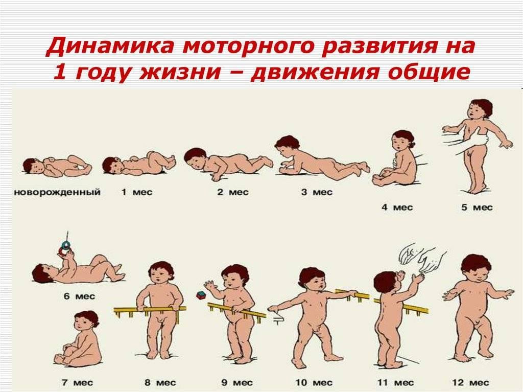 Развитие ребенка от 2 до 3 месяцев. самое важное о детях