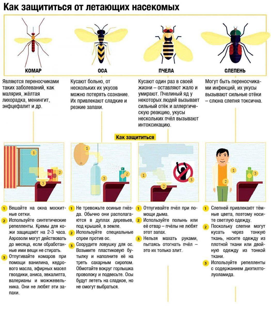 Оказание первой помощи при укусах насекомых: пчелы, осы, шершни, клещи