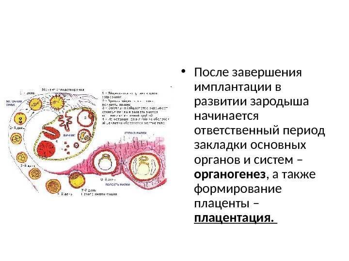 На какой день после овуляции происходит имплантация эмбриона: признаки, ощущения
