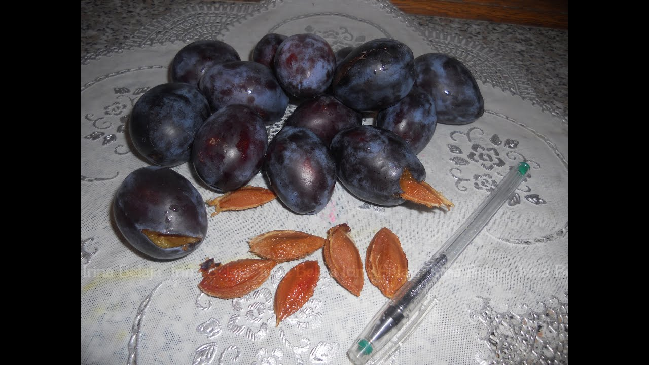 Синильная кислота в косточках яблок, абрикоса, сливы, вишни, винограда