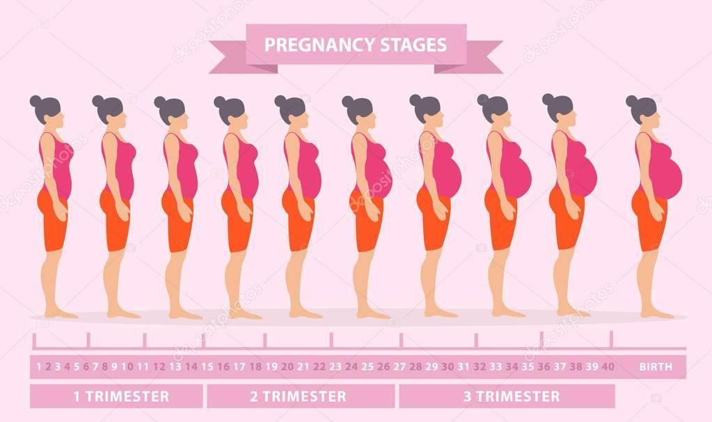 Беременность: как начинается и протекает с первого дня зачатия