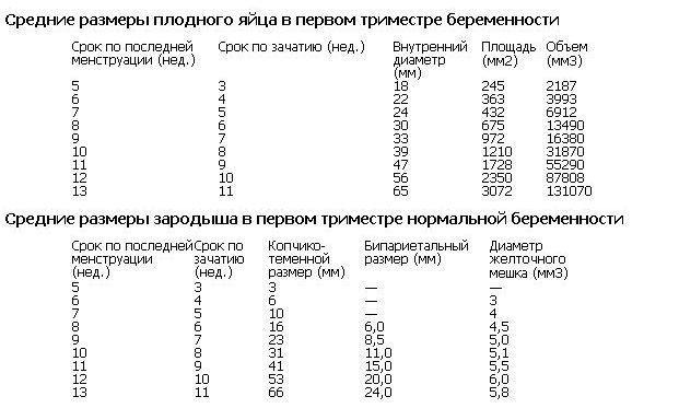 Размер плодного яйца по неделям беременности в таблице: нормы от даты зачатия