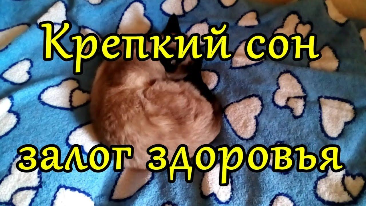 Рецепт крепкого сна. глубокий сон, фазы сна. как быстро заснуть