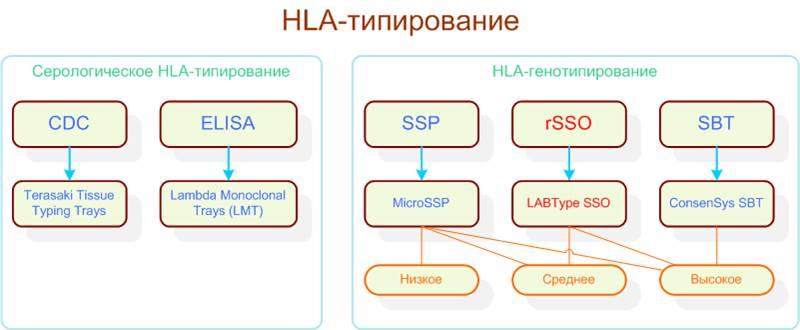 Расшифровка анализа hla типирование 1 класа