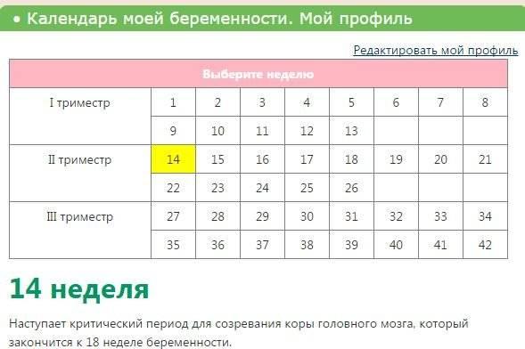 Калькулятор беременности - точный расчет по дням и неделям | календарь беременности