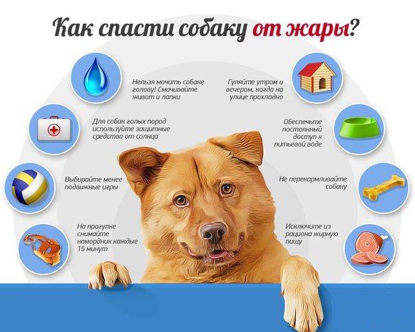 Как выбрать домашнее животное для ребенка: правила выбора и советы по уходу
