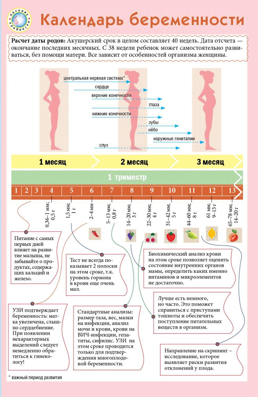 Калькулятор беременности по неделям: рассчитать срок беременности и дату родов по дню последней менструации :: polismed.com