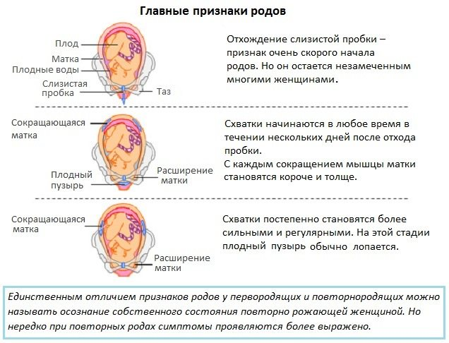 Вторая беременность: особенности протекания и признаки ранних этапов беременности