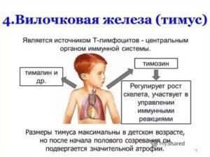 Показания к узи вилочковой железы и результаты обследования