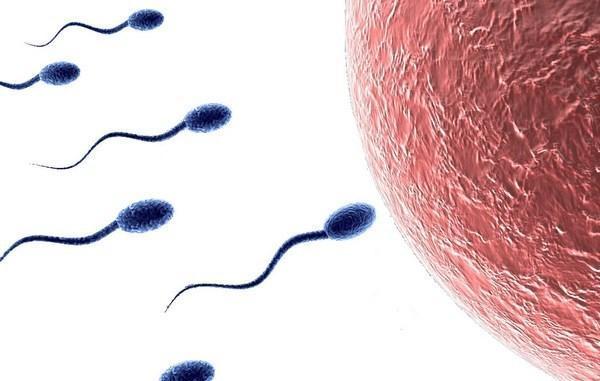 Плохая спермограмма: причины, методы лечения, последствия