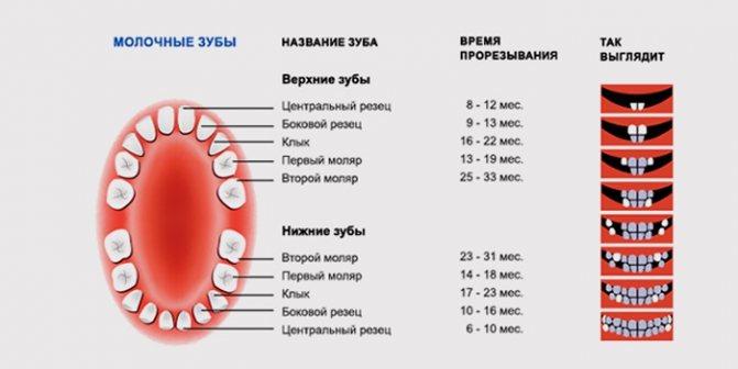Как отличить простуду от прорезывания зубов, советы родителям