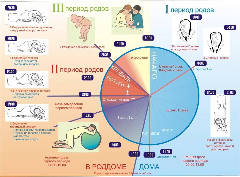 Вторая беременность: особенности вынашивания, отличие от первой