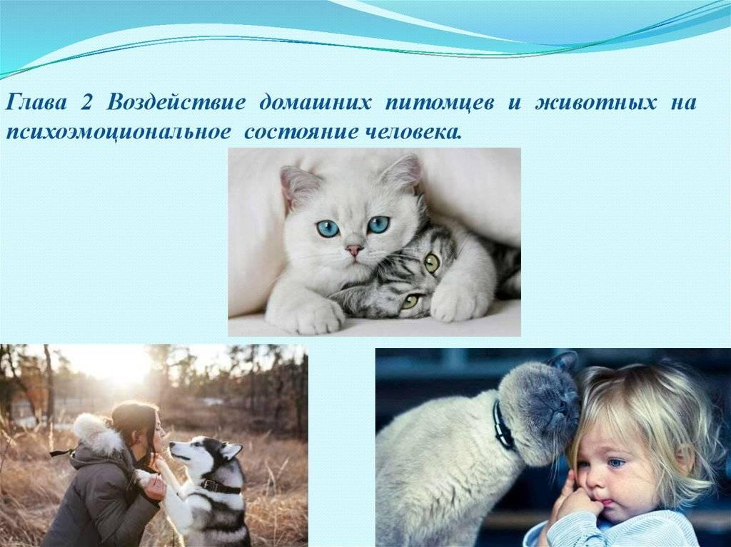 6 преимуществ детей, растущих с домашними животными