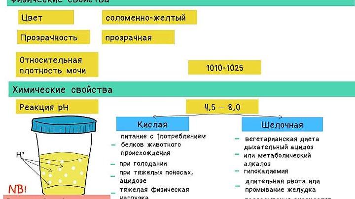 Удельный вес (плотность) мочи: норма, причины повышения или снижения