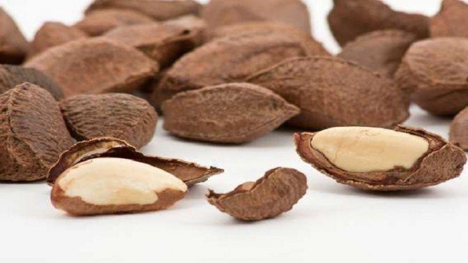 Какие полезные свойства есть у бразильского ореха, чем полезен орех для женщин, можно ли есть в период беременности и лактации
