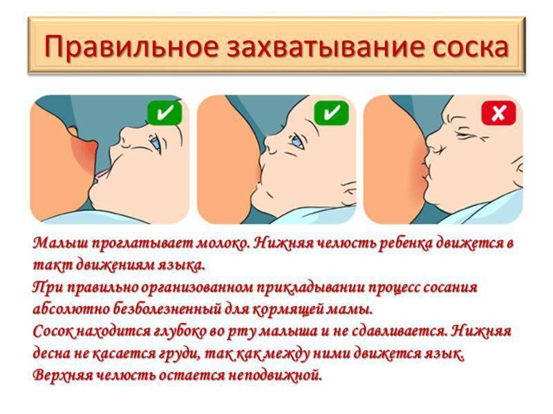 Как правильно прикладывать новорожденного к груди | салид