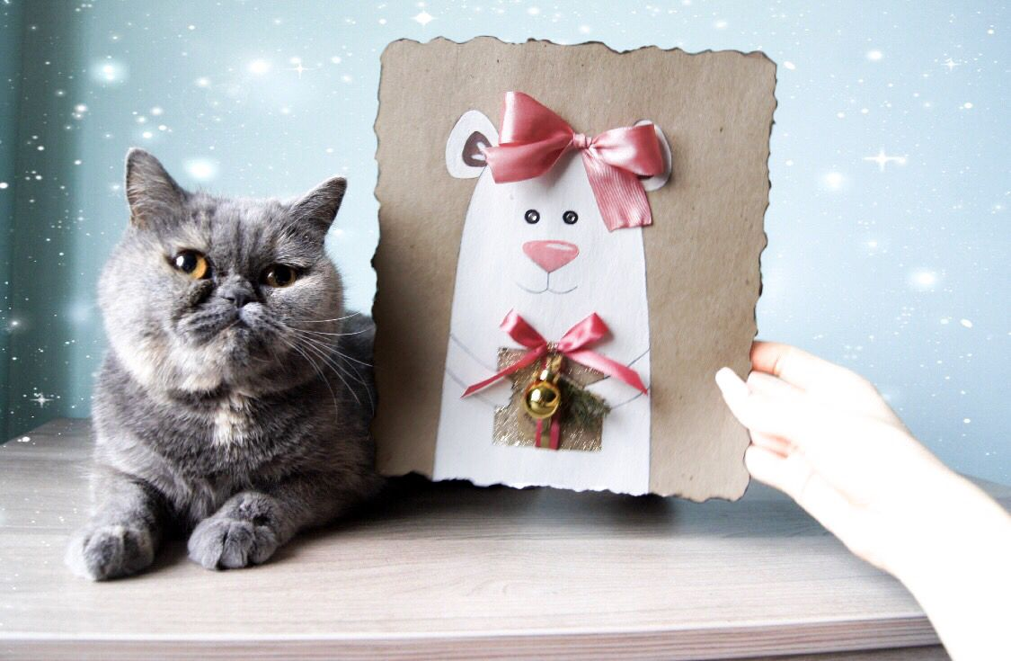 Что подарить коту на новый год: 11 идей подарков