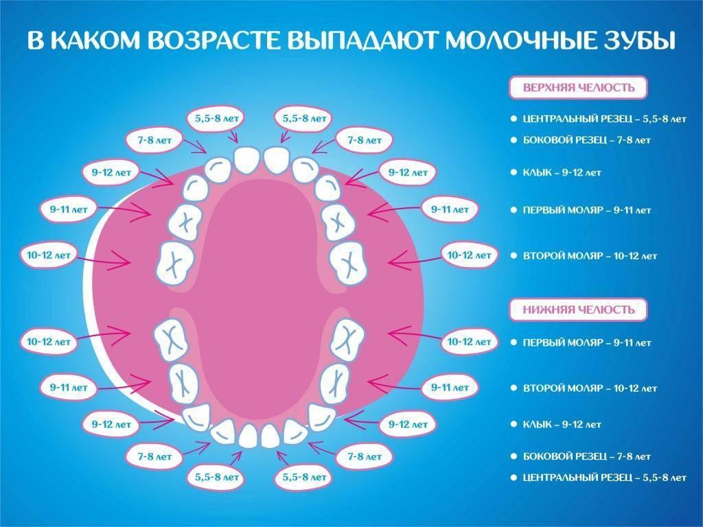 Когда меняются молочные зубы у детей на постоянные: в каком возрасте и как это происходит, сменяются ли детские коренные зубки