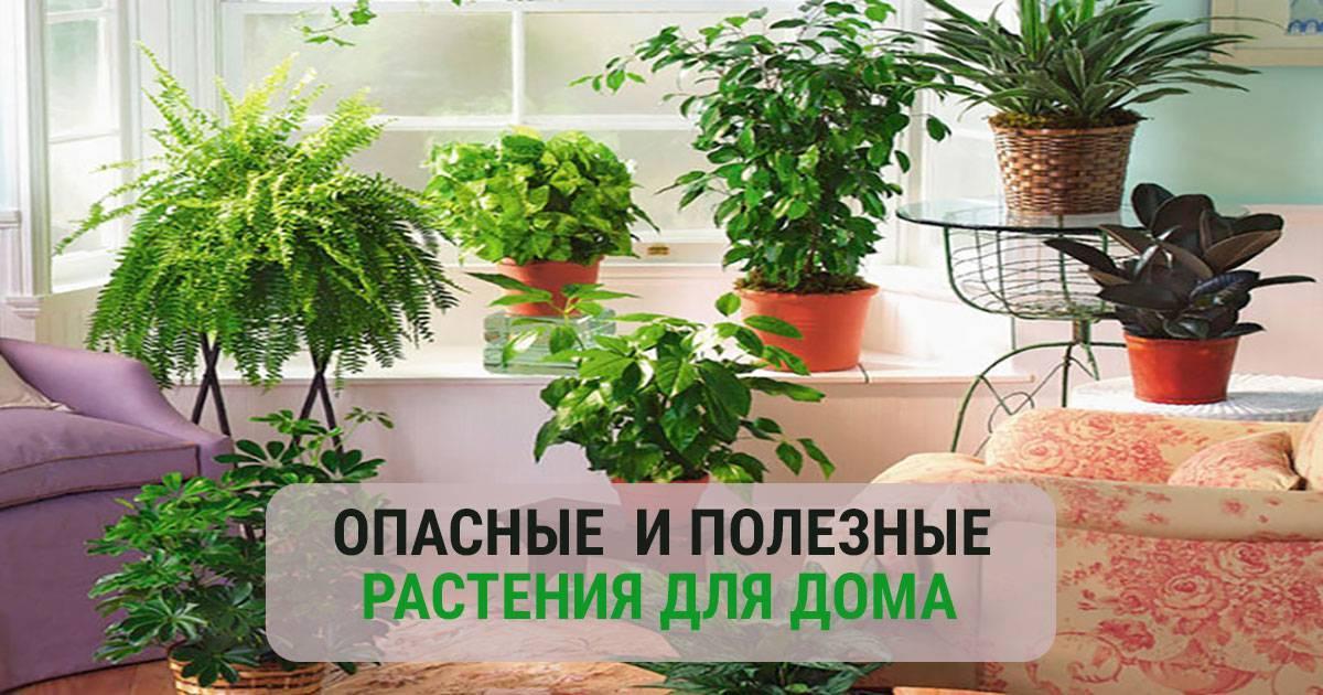 Цветы в комнате для детей: как выбрать
