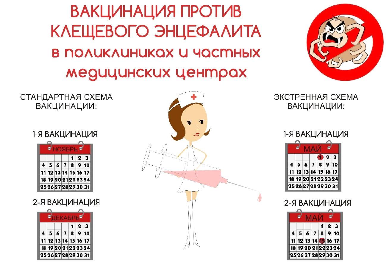 Прививка от клеща: сроки, схема вакцинации, когда можно делать