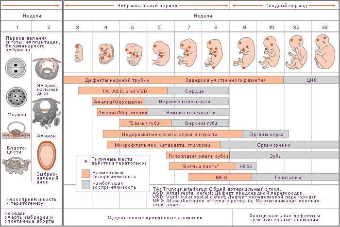 Третья беременность, третьи роды: отзывы рожавших мам, врачей. третьи роды: какие они, как проходят?