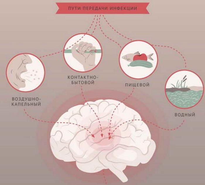 Симптомы и инкубационный период энтеровирусного менингита у детей