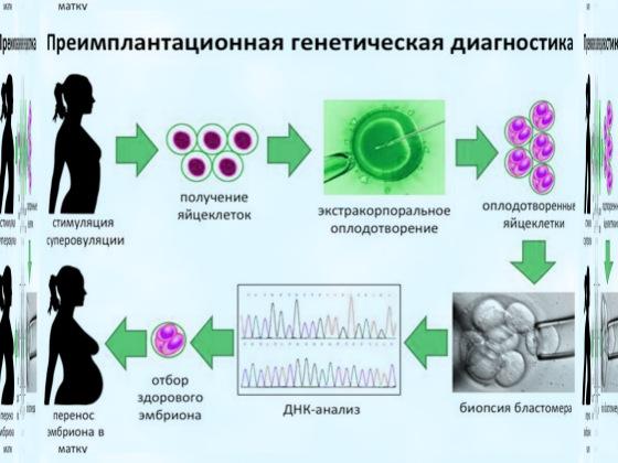 Предимплантационная генетическая диагностика эмбрионов при эко, методы пгд (fish, cgh, pcr, ngs), стоимость диагностики