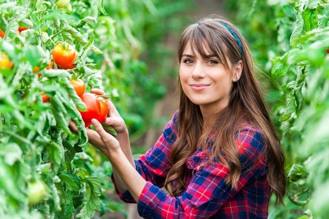 Можно ли кормящей маме помидор: свежий, печеный, желтый, соленый