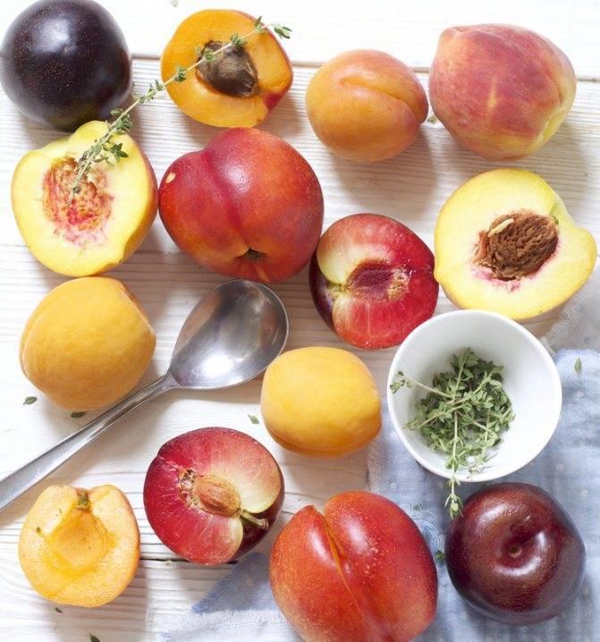 Персик со скольки месяцев можно давать