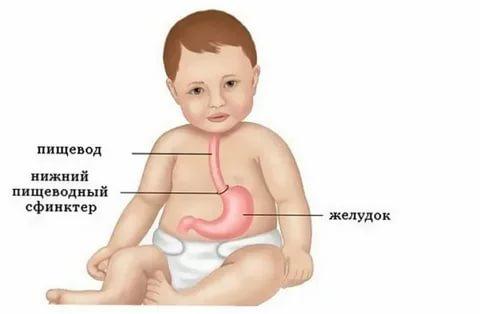 Что делать, если у ребенка остановился желудок и началась рвота, как запустить работу органа пищеварения?
