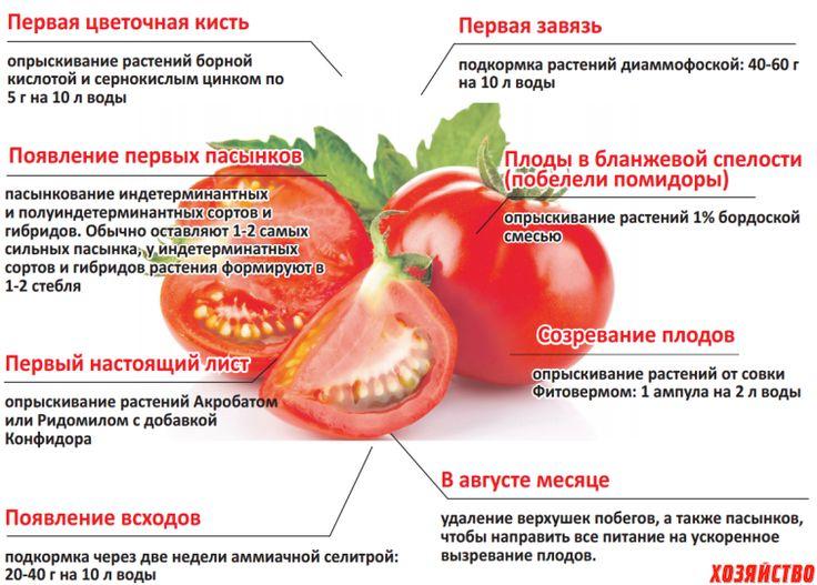 Когда можно давать помидоры ребенку