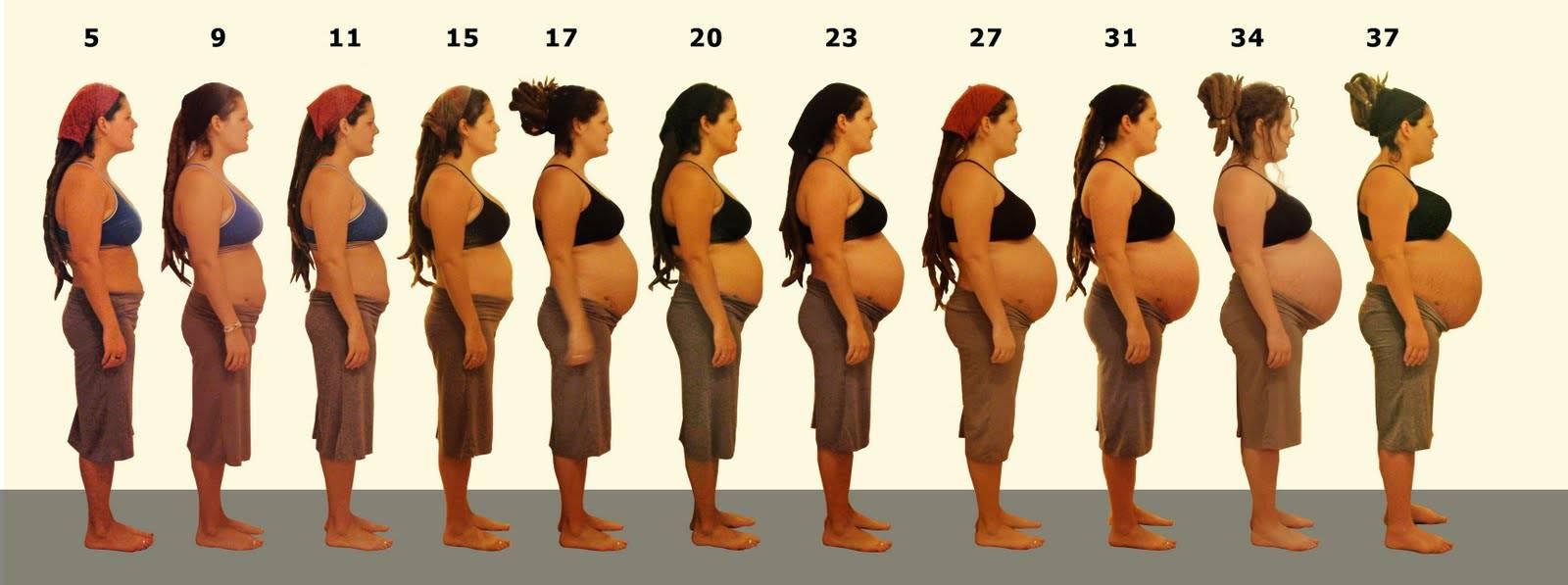 Беременность – когда начинает расти живот, что нужно знать