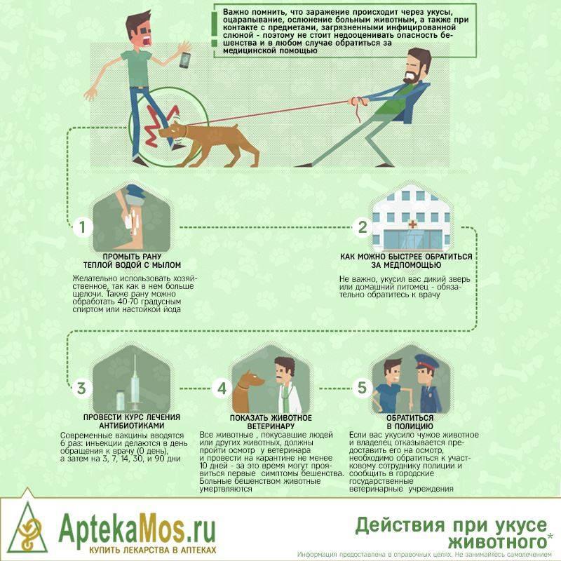 Что делать когда укусила собака: какие делают уколы и сколько