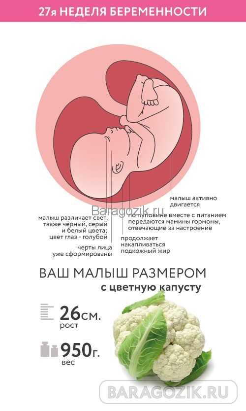 26 неделя беременности: что происходит с малышом и мамой, фото, развитие плода, ощущения