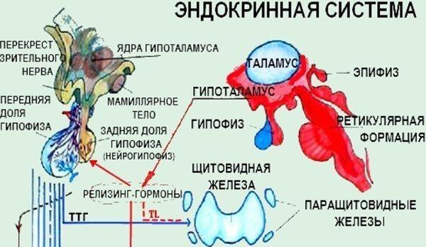Норма пролактина у мужчин по возрасту, причины повышения и понижения уровня гормона, симптомы и лечение